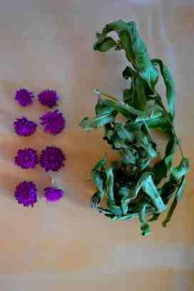 Fleur de trèfles 2