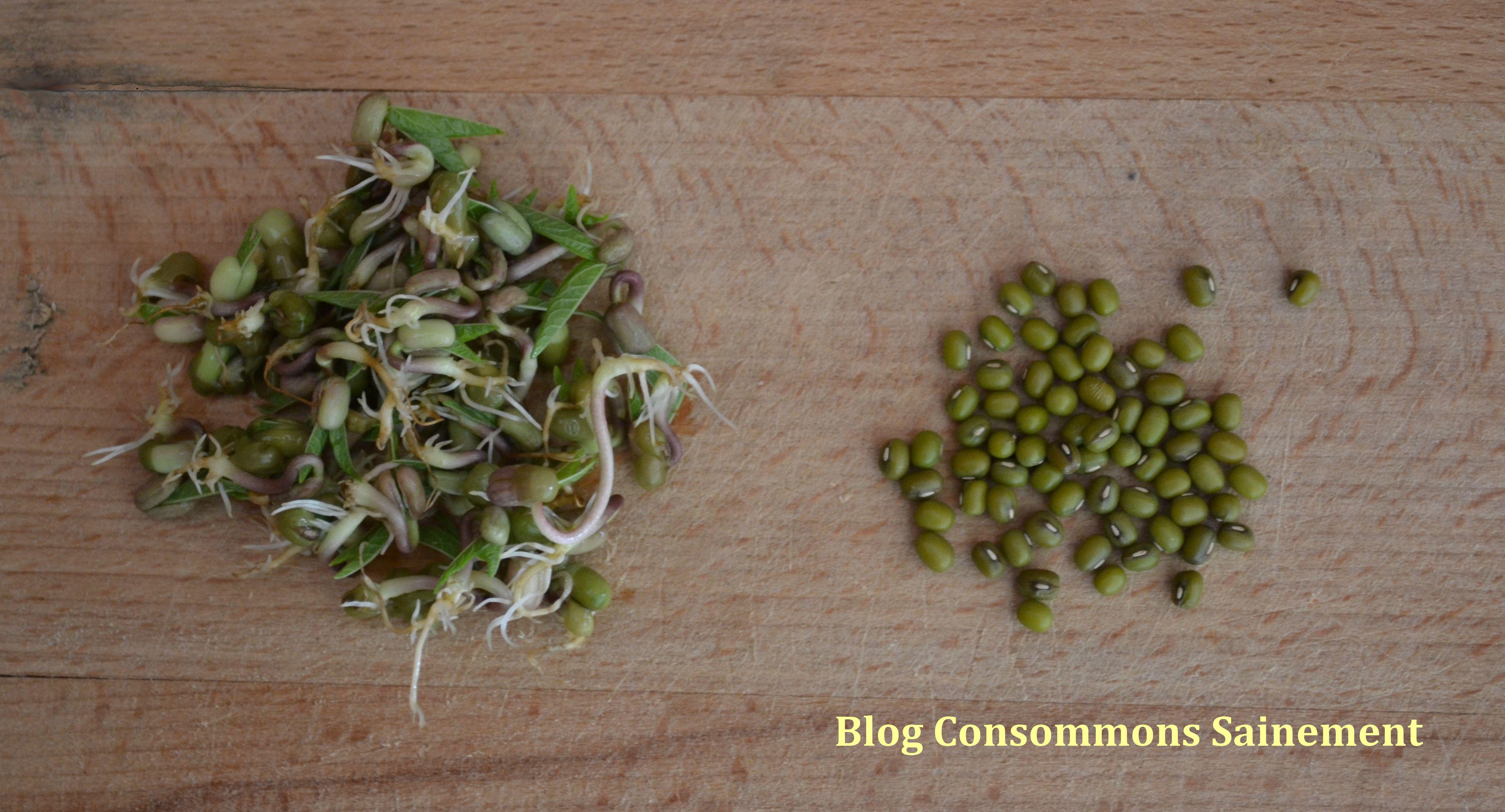 Comment faire germer ses graines sans mat riel sp cifique consommons sainement - Graine de pasteque sans pepin ...