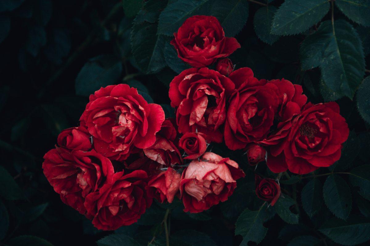7 raisons de ne plus acheter de fleurs coupées